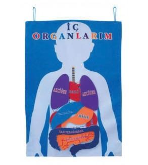 Cırtlı Organ Panosu